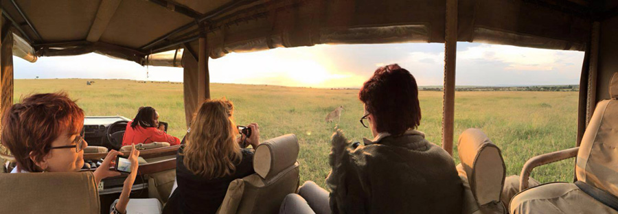 lions-at-sunset